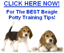 Beagle Potty Training